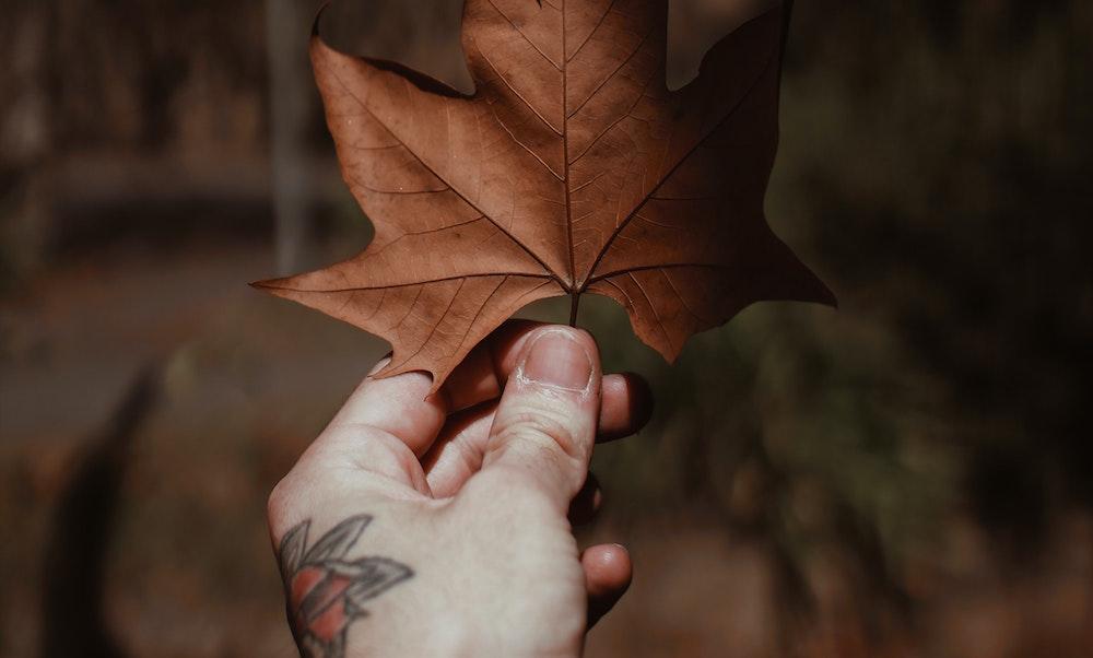 Fall Tattoo Ideas Vancouver Toronto